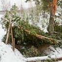 10 Critical Points You Need To Know About Building Any Natural Shelter - Online Survival Blog & Survival News | BOB to BOL by BOV | Scoop.it
