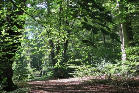 The magic of the forest - the lost byway | Psychogeography | Scoop.it
