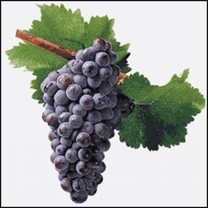 Vins grenache - Le blog d'Uvinum | oenotentic | Scoop.it