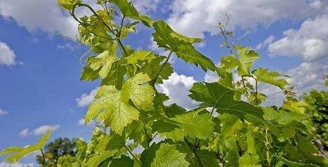 LGV : les vins de Bordeaux se sentent ignorés par GPSO | Oenologie - Vins - Bières | Scoop.it