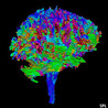 Neuroscience drug discovery