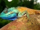 Colorful New Lizard Identified in Vietnam | Animals R Us | Scoop.it