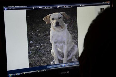 Dog on leash shot and killed by SC deputy | Pet-Related News | Scoop.it