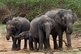 Elephants In Zoos Don't Do Well | Animals R Us | Scoop.it