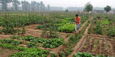 UN Report Says Small-Scale Organic Farming Only Way To Feed The World | Sustain Our Earth | Scoop.it