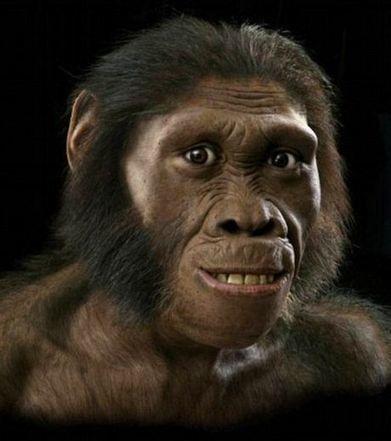 LES MOULAGES DE SQUELETTES D'AUSTRALOPITHECUS SEDIBA A LONDRES | Prehistoire | Scoop.it