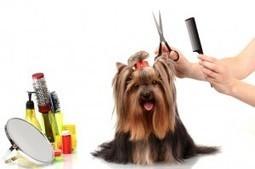 Dog Grooming CT | Dog Training CT | Scoop.it