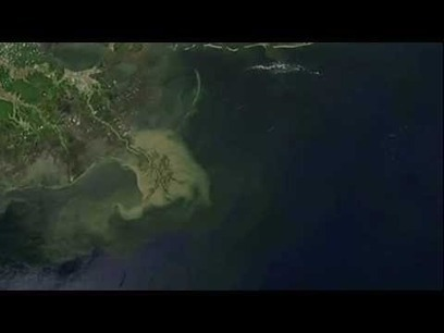 BP Oil Spill in the Gulf of Mexico: One Year Later | Sustainability in the Philadelphia Area | Scoop.it