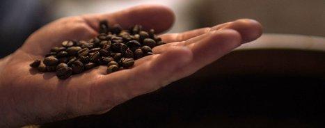 La Suisse profite activement du café qui représente 1% de son PIB | Suisse : économie et rayonnement | Scoop.it