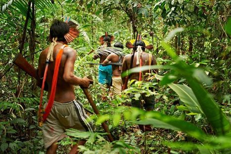Rain Forest Warriors: How Indigenous Tribes Protect the Amazon | Rainforest EXPLORER:  News & Notes | Scoop.it