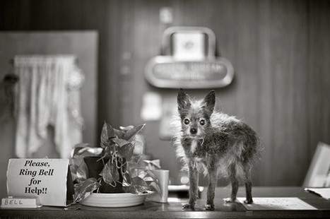 Senior Dogs Photographed Across America | Fashion Models Photography | Scoop.it