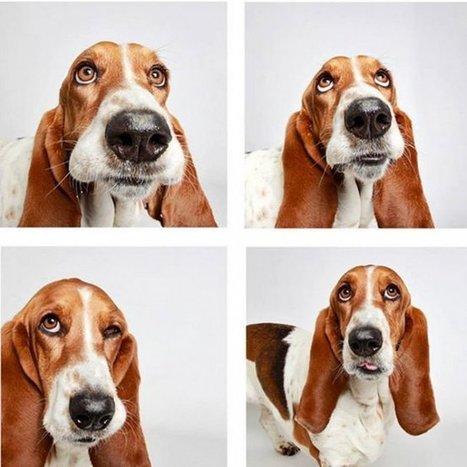 Saviez-vous qu'un chien pouvait sourire? | Food for Pets | Scoop.it