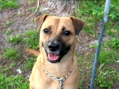 South Florida adoptable dogs list | Dogs | Scoop.it