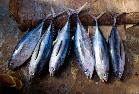Think You're Eating Tuna? Think Again | Sustain Our Earth | Scoop.it