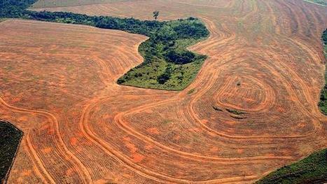 """BBC Mundo - Noticias - """"Récord"""" de deforestación en la amazonía brasileña   Gestión y competencias profesionales   Scoop.it"""