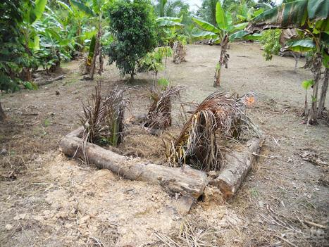 Regaining Sustainable Agriculture Practices in the Amazon | Organic Farming | Scoop.it