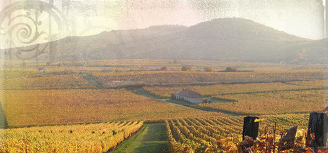 The Top Ten Hungarian Grapes | Hungarian Wine Society | Budapest! | Scoop.it
