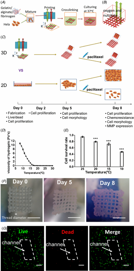 Three-dimensional printing of Hela cells for cervical tumor model in vitro - IOPscience   e-merging Knowledge   Scoop.it