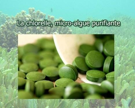 La chlorelle, une algue purifiante | Valorisation des algues | Scoop.it