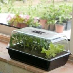 Mini-serre rigide standard 38x24x18 cm (Jany) - Alsagarden | Jardinerie Alsagarden | Scoop.it