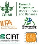 What do you think of the results of the survey on bananas? | Agricultural Biodiversity | Scoop.it