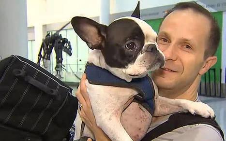 Un pilote détourne un vol pour sauver la vie d'un chien | CaniCatNews-actualité | Scoop.it