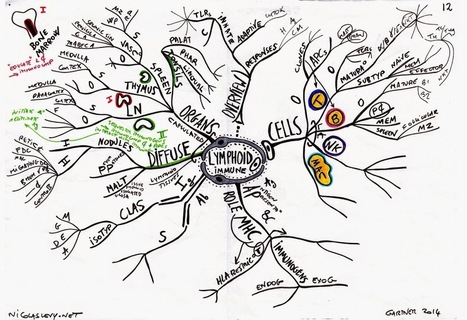 Mind Maps Histology Lymphoid (Gartner 2014) | nicolaslevy.net | Scoop.it