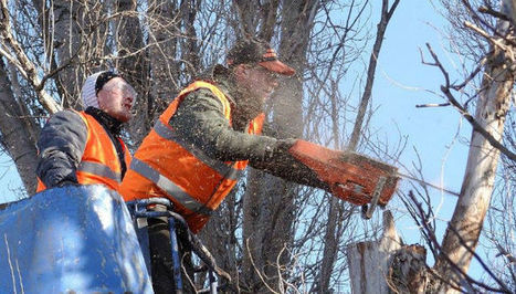 Tree service inTempe,AZ- Manuel Tree Service LLC | Accurate Hood Cleaning | Scoop.it