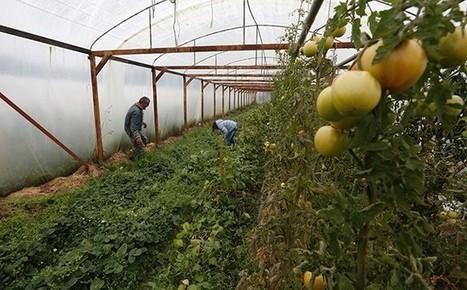 TOUT COMPTE FAIT…Ça gagne combien un agriculteur qui passe par La Ruche qui dit Oui? | AMAP - Bio | Scoop.it