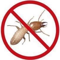 Membasmi rayap dan tindakan pencegahan | jasa basmi rayap | Scoop.it