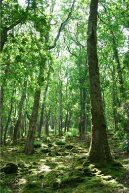 Should the role of afforestation in climate change mitigation policy be re-evaluated? | Sustainability | Scoop.it