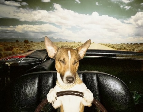 DOG TRAINING BY PROFESSIONAL DOG TRAINER:- WESLEY LAIRD: Car Sick Dogs | Dog  Training Melbourne | Scoop.it