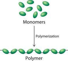 Differences Between a Monomer and a Polymer | Difference Between | Differences Between a Monomer vs a Polymer | JIS Chemistry | Scoop.it