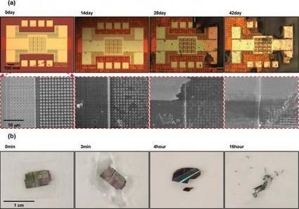 Water-soluble silicon leads to dissolvable electronics | Amazing Science | Scoop.it