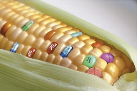 La biotecnología favorece la trazabilidad y seguridad de los alimentos | All About Food | Scoop.it