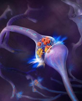 Making memorieslast | Psychology and Brain News | Scoop.it