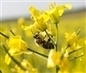 Ni un paso atrás en la protección de las abejas | Apicultura Investigación | Scoop.it