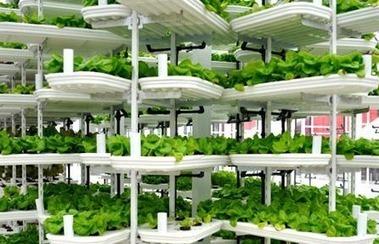 Alterrus performs vertical crop-growing trials with U.K. processing firm | Digital Sustainability | Scoop.it