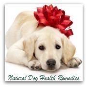 Dog Detox | How to Detoxify Your Dog | Plantsheal | Scoop.it