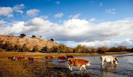 New Mexico Ranchers Rally; Feds Still Deny Cattle Access to Water | Restore America | Scoop.it