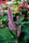 Hidroponía da generalmente mejores resultados que aeroponía en el cultivo de especies aromáticas asiáticas | Cultivos Hidropónicos | Scoop.it