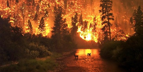 Man-Made Global Warming Root Cause of Relentless Forest Fires | Farming, Forests, Water, Fishing and Environment | Scoop.it