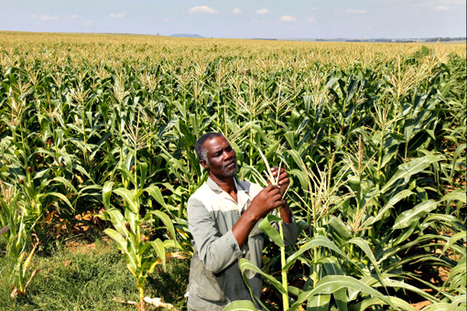 New study highlights gender inequality in African farm ownership   Gender Injustice   Scoop.it