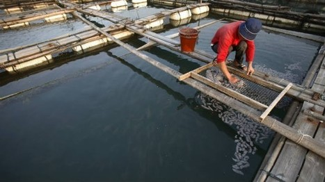 Fish-farming ends hunger, empowers women - The Hill (blog)   Aquaculture Directory   Scoop.it