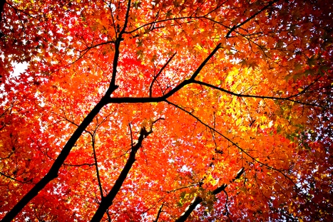 Top Autumn Reflections in Six Words | Six-Word Memoirs from SMITH Magazine | goethe | Scoop.it