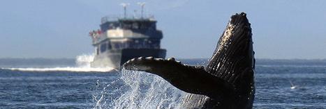 Le bruit des moteurs de bateaux stresse les animaux marins   Zones humides - Ramsar - Océans   Scoop.it