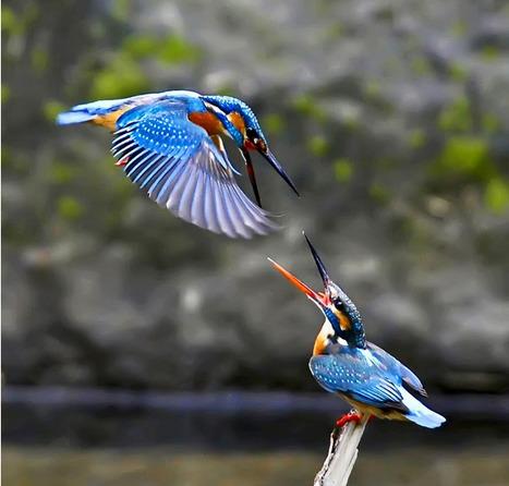 Beautiful Birds   AMAZING things!   Scoop.it