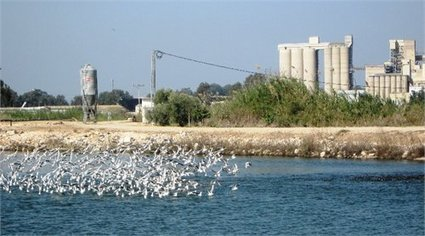 Development of a Sustainable Aquaculture Industry - Israel - 29 October–11 November 2014 | Fish in Demand -Aquaculture-and-More by Youmanitas | Scoop.it