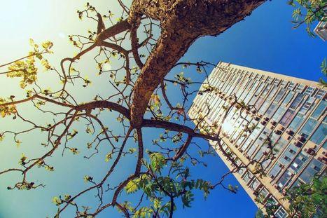 Planter des arbres en ville peut sauver des dizaines de milliers de vies par an - notre-planete.info   Sale temps pour la planète   Scoop.it