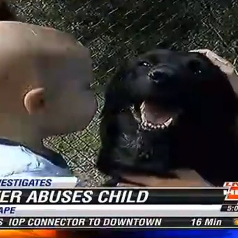 Hero dog alerts parents to abusive baby-sitter, saves baby | Animal Science | Scoop.it